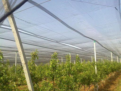 Plastic Anti Hail Netting